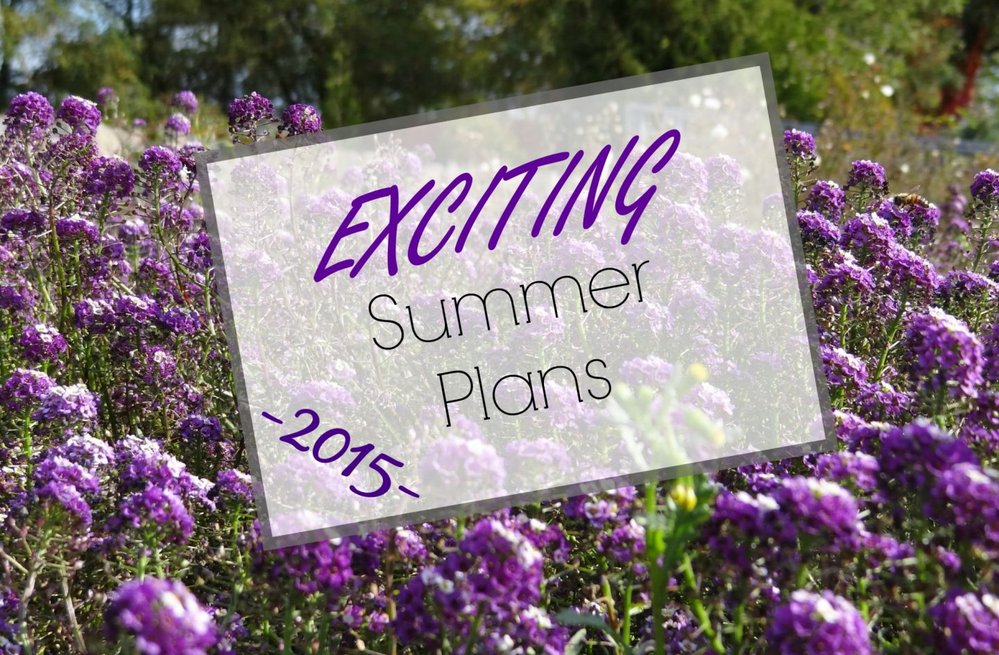 Exciting Summer Plans | 2015